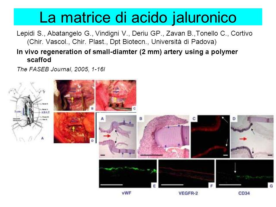 La matrice di acido jaluronico