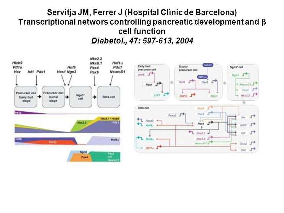 Servitja JM, Ferrer J (Hospital Clìnic de Barcelona) Transcriptional networs controlling pancreatic development and β cell function Diabetol., 47: , 2004