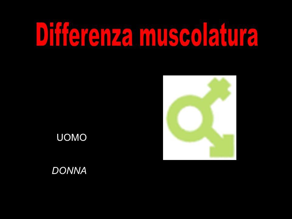 Differenza muscolatura