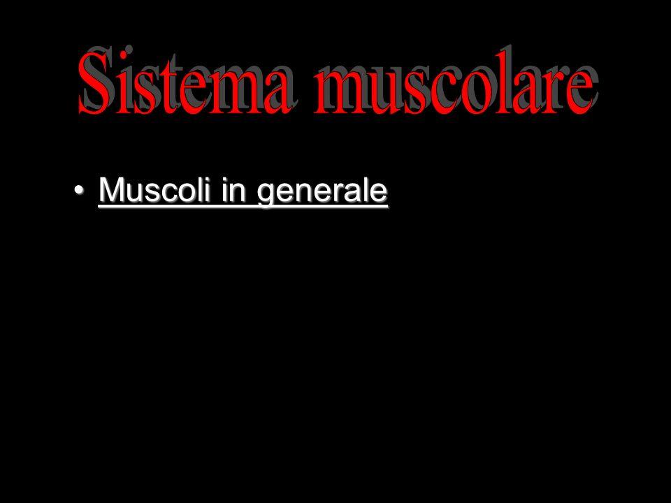 Sistema muscolare Muscoli in generale Le proprietà del muscolo