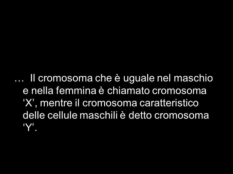 … Il cromosoma che è uguale nel maschio e nella femmina è chiamato cromosoma 'X', mentre il cromosoma caratteristico delle cellule maschili è detto cromosoma 'Y'.