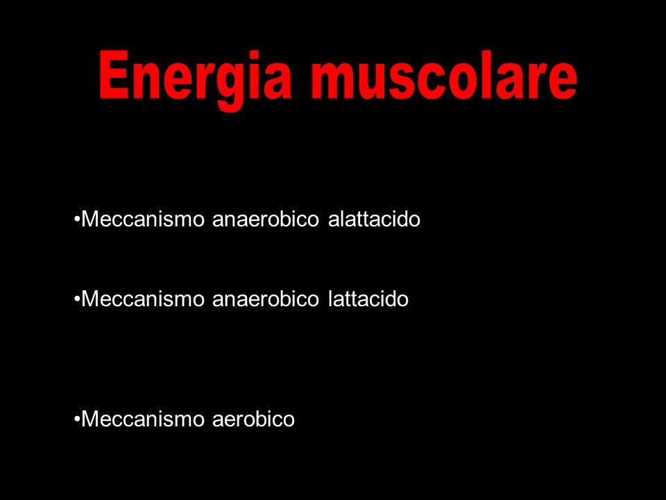 Energia muscolare Meccanismo anaerobico alattacido