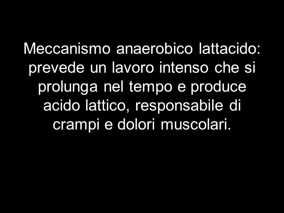 Meccanismo anaerobico lattacido: prevede un lavoro intenso che si prolunga nel tempo e produce acido lattico, responsabile di crampi e dolori muscolari.