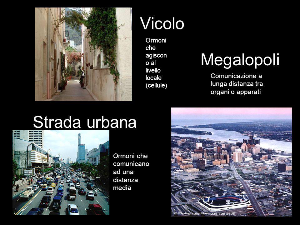 Vicolo Megalopoli Strada urbana