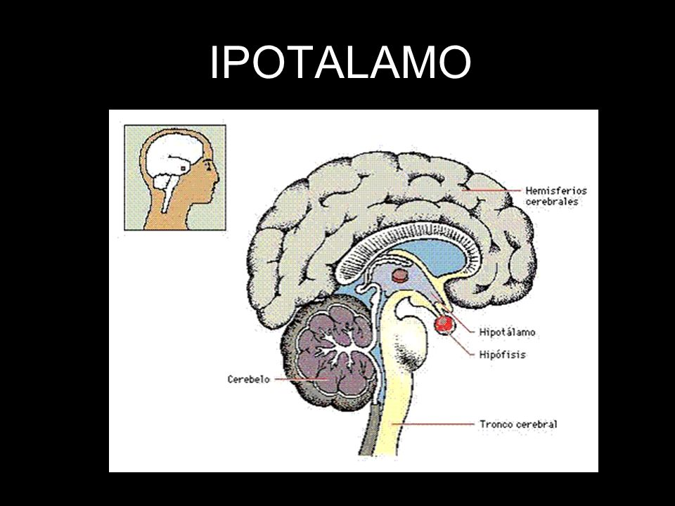 IPOTALAMO