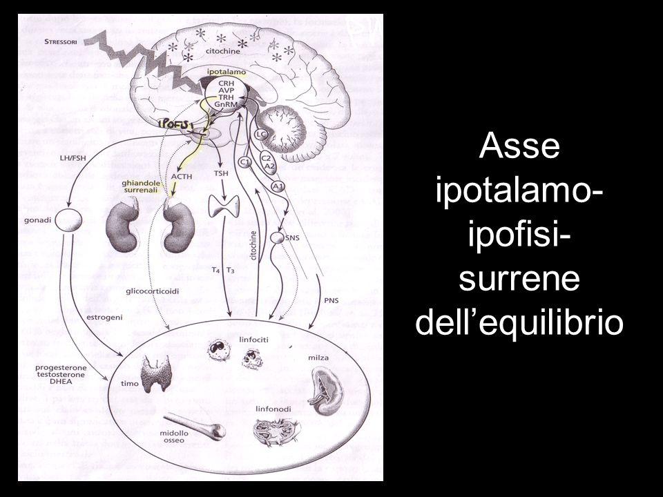 Asse ipotalamo-ipofisi-surrene dell'equilibrio
