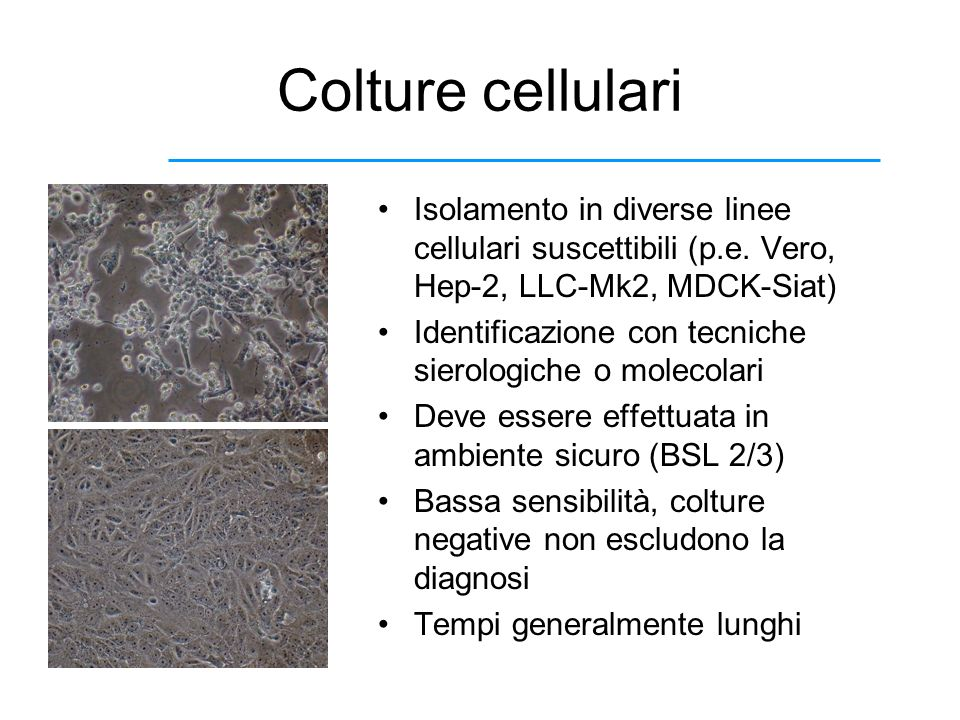 Colture cellulari Isolamento in diverse linee cellulari suscettibili (p.e. Vero, Hep-2, LLC-Mk2, MDCK-Siat)