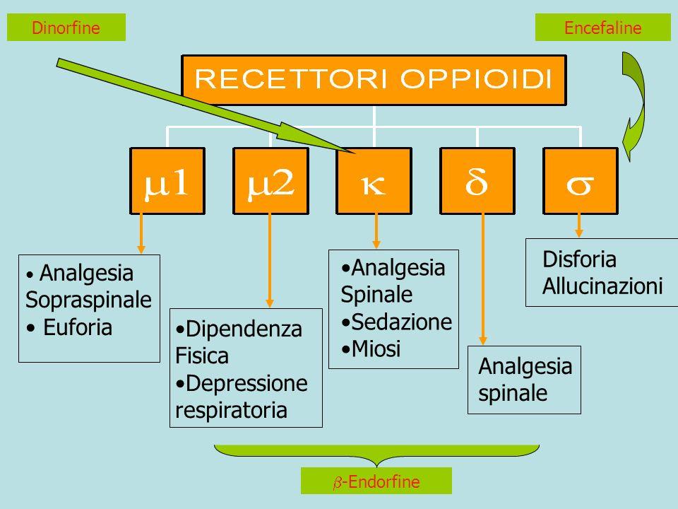 Disforia Analgesia Allucinazioni Spinale Sopraspinale Sedazione