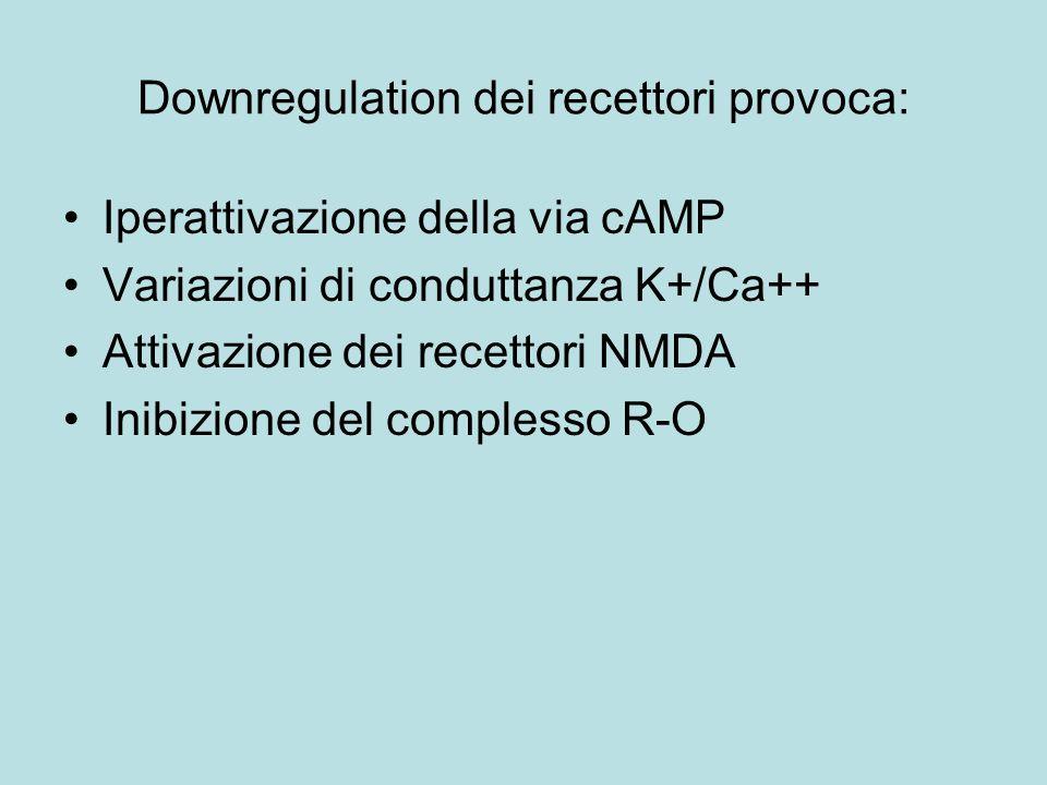 Downregulation dei recettori provoca: