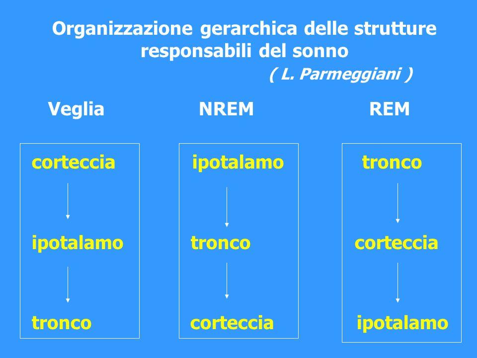 Organizzazione gerarchica delle strutture responsabili del sonno ( L