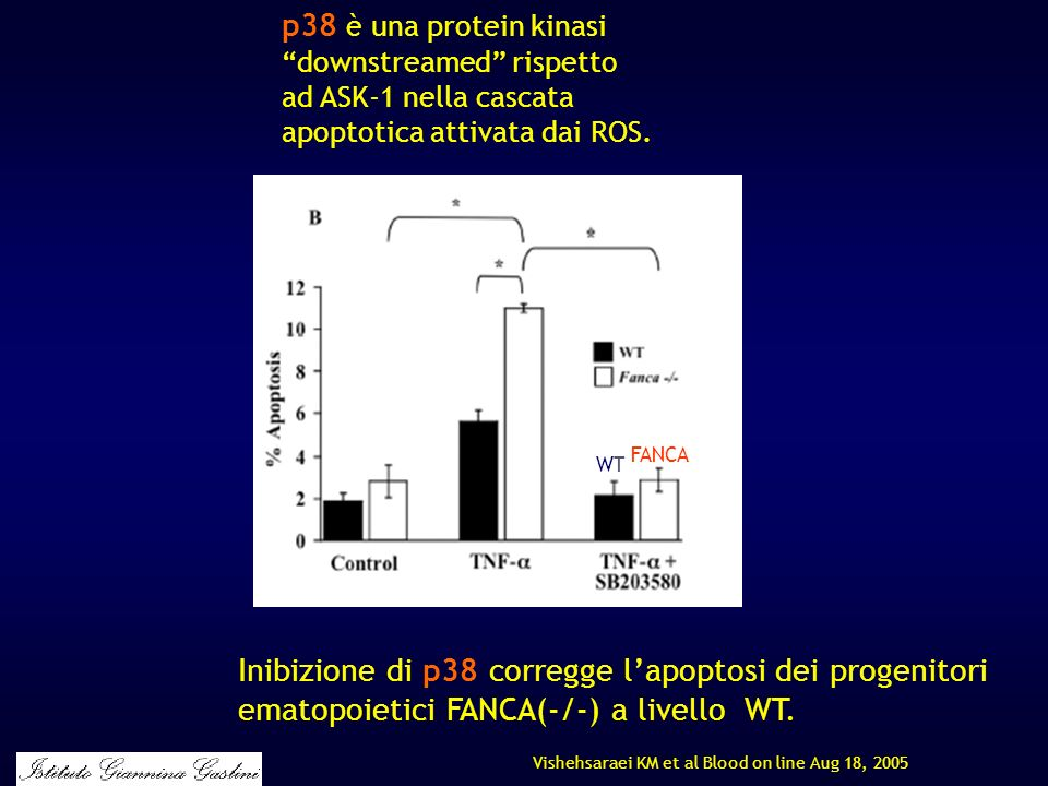 p38 è una protein kinasi downstreamed rispetto