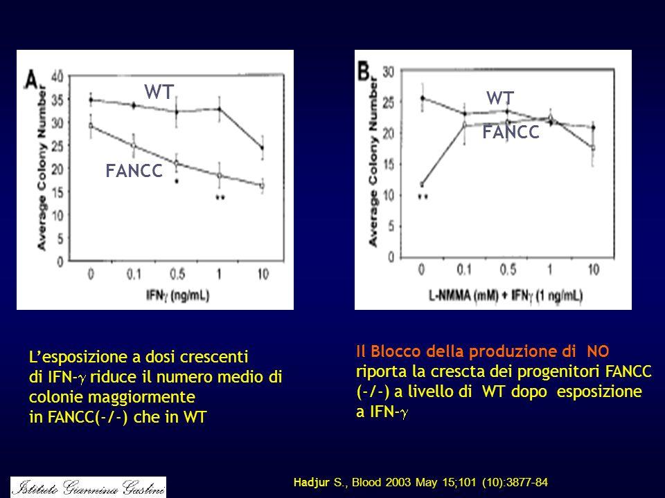 WT WT. FANCC. FANCC. Il Blocco della produzione di NO riporta la crescta dei progenitori FANCC (-/-) a livello di WT dopo esposizione a IFN-