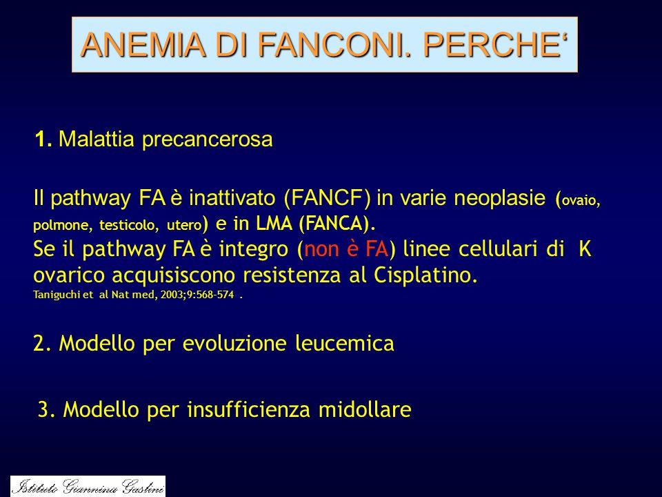 ANEMIA DI FANCONI. PERCHE'