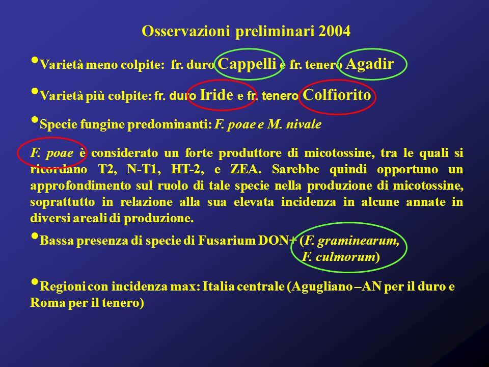 Osservazioni preliminari 2004