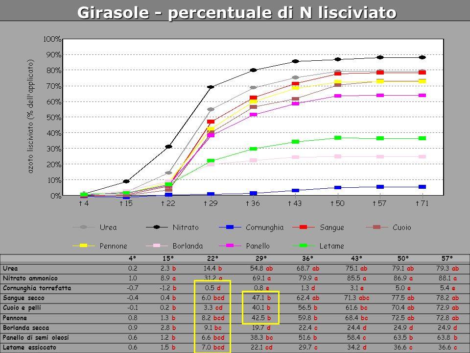 Girasole - percentuale di N lisciviato