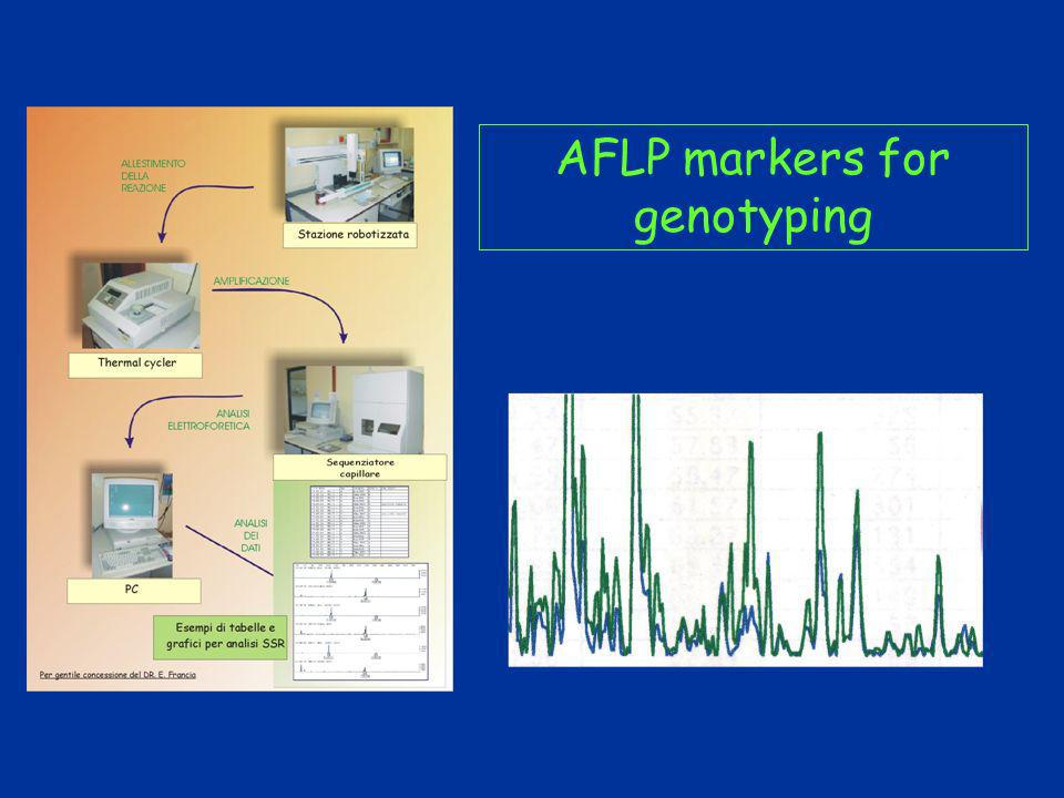 AFLP markers for genotyping
