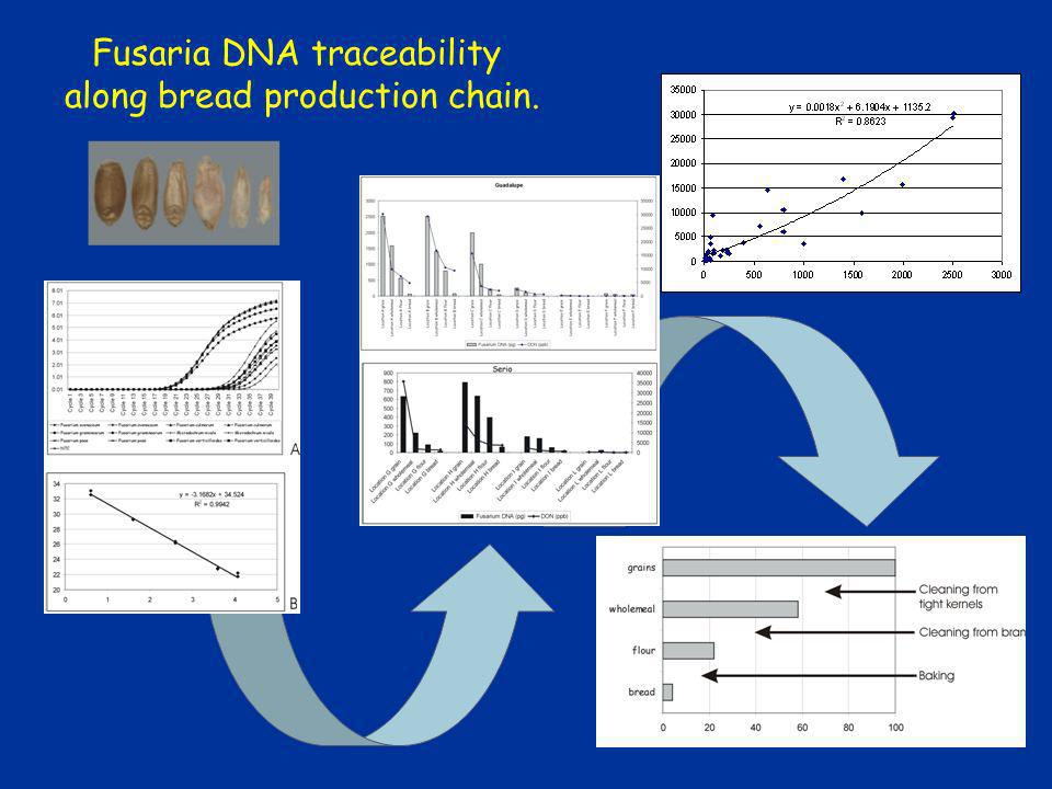 Fusaria DNA traceability along bread production chain.