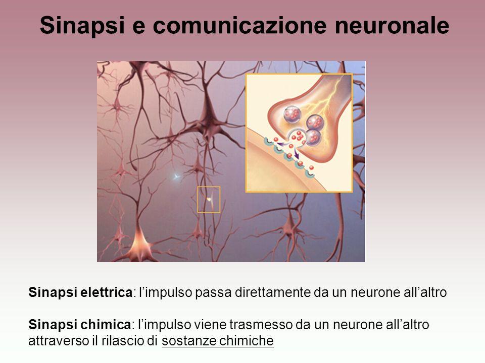 Sinapsi e comunicazione neuronale