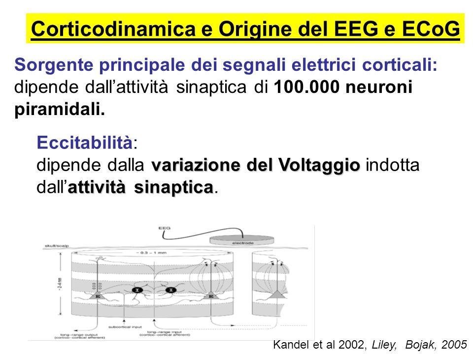Corticodinamica e Origine del EEG e ECoG