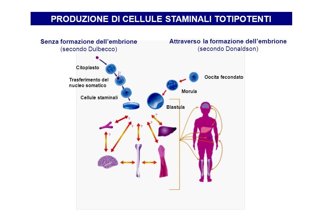 PRODUZIONE DI CELLULE STAMINALI TOTIPOTENTI