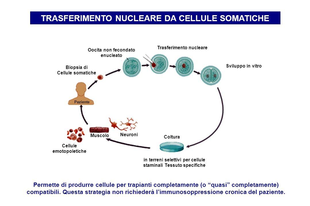 TRASFERIMENTO NUCLEARE DA CELLULE SOMATICHE