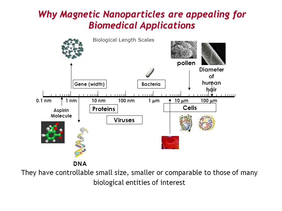 Why Magnetic Nanoparticles are appealing for Biomedical Applications