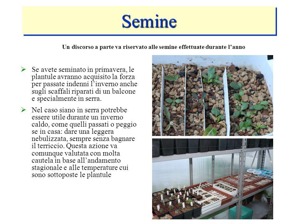 Un discorso a parte va riservato alle semine effettuate durante l'anno