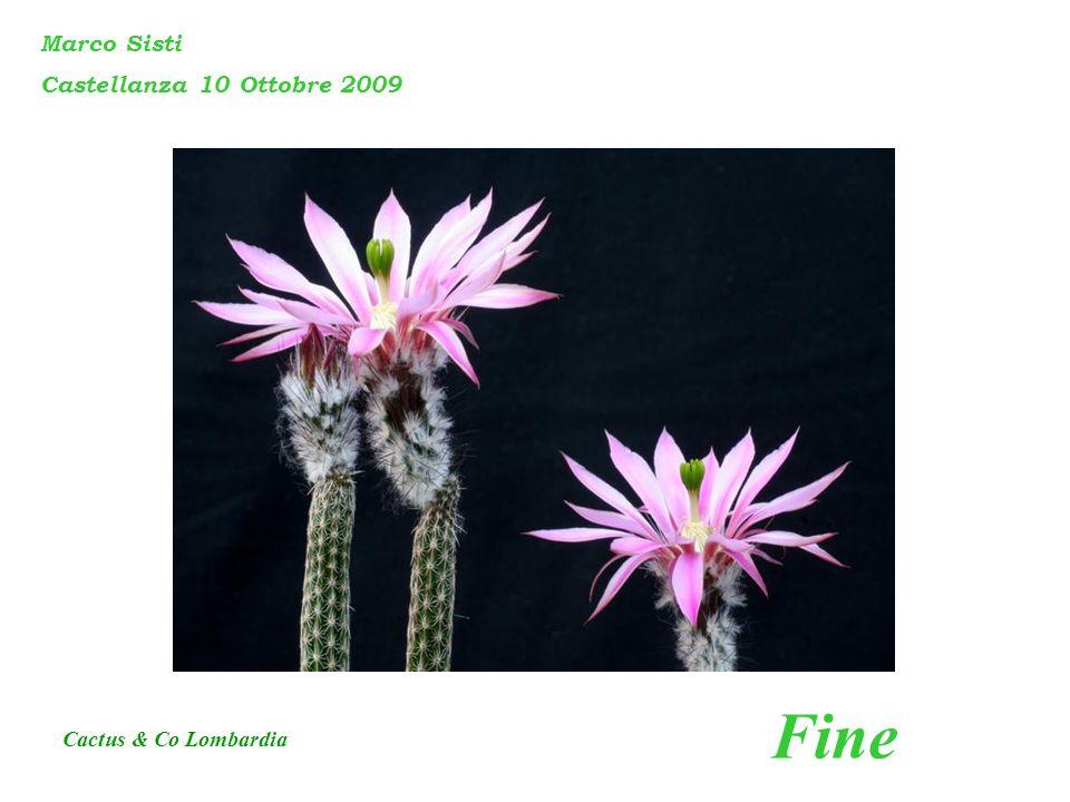 Marco Sisti Castellanza 10 Ottobre 2009 Fine Cactus & Co Lombardia