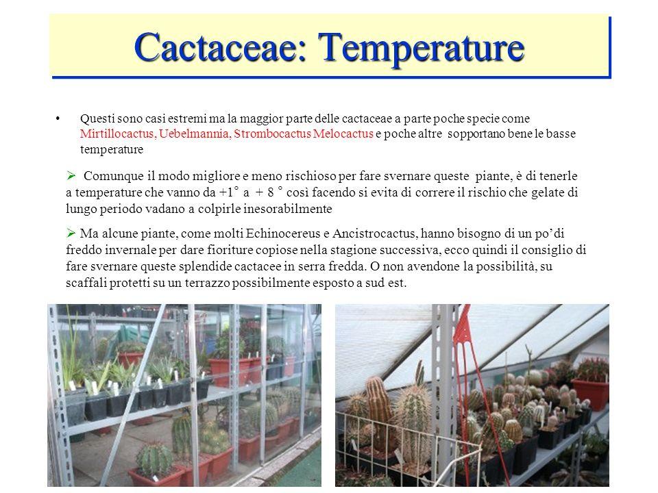 Cactaceae: Temperature