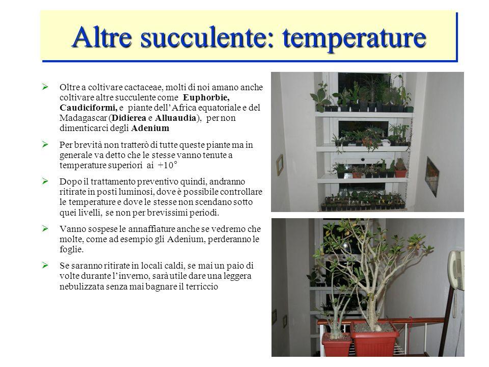 Altre succulente: temperature