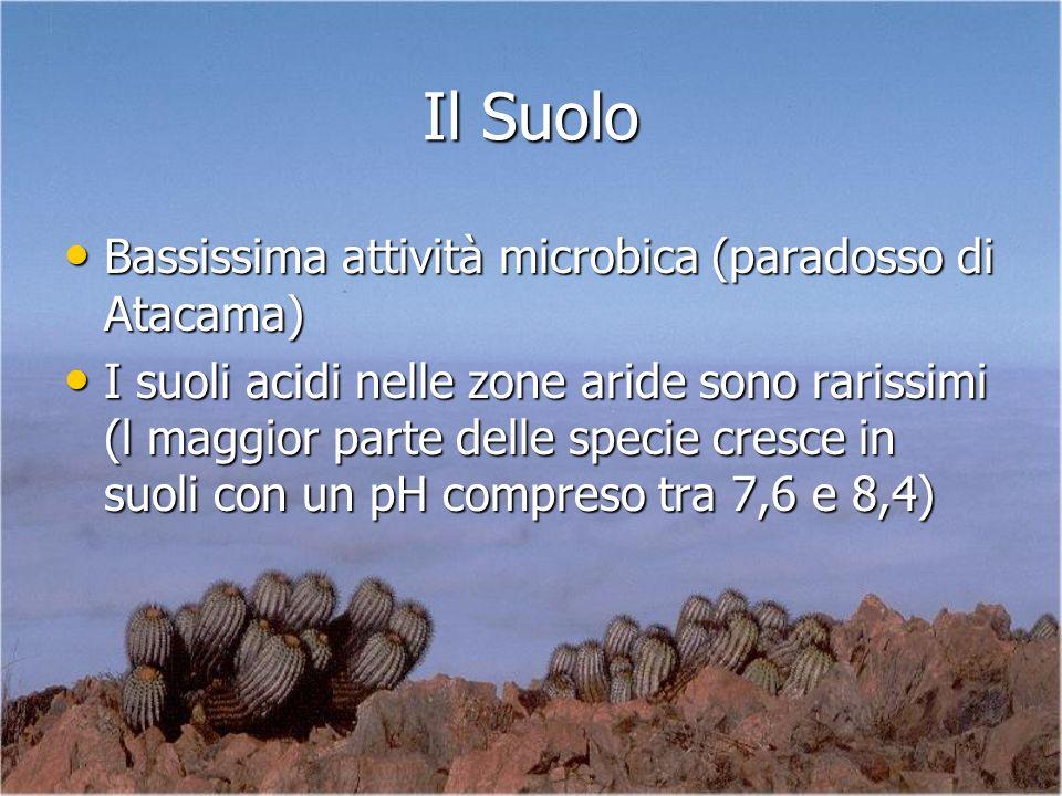 Il Suolo Bassissima attività microbica (paradosso di Atacama)