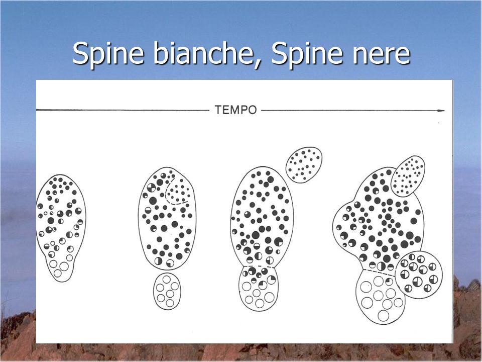 Spine bianche, Spine nere