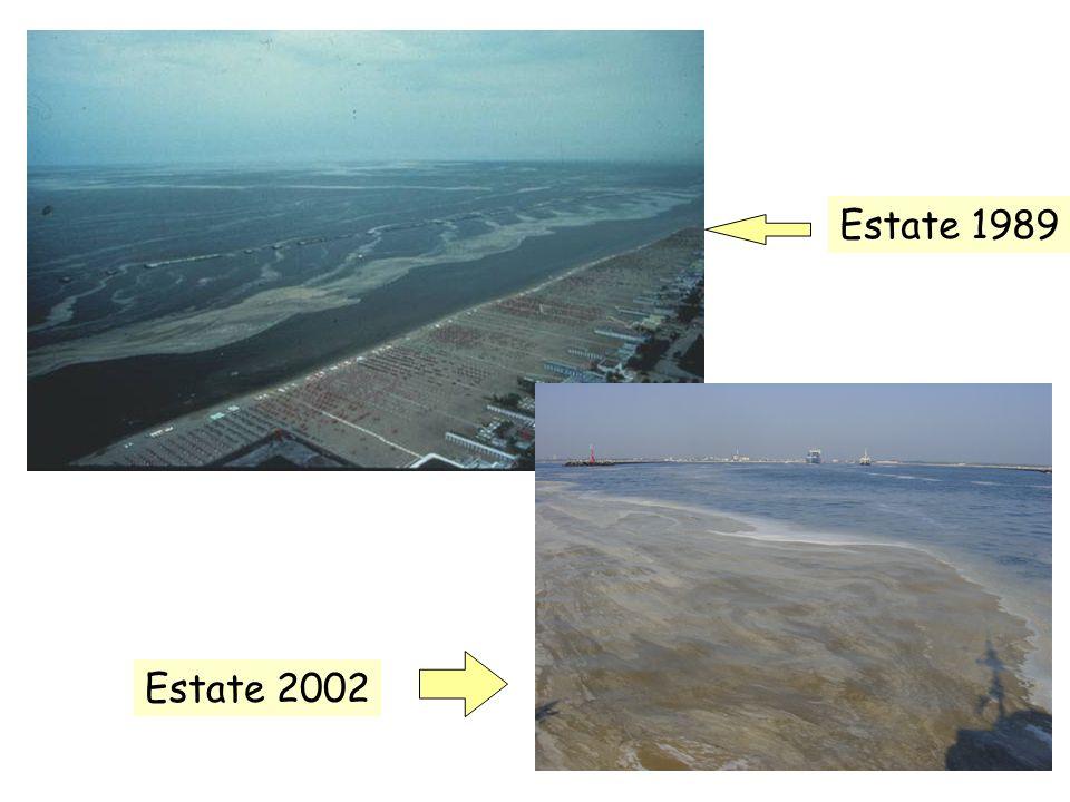 Estate 1989 Estate 2002