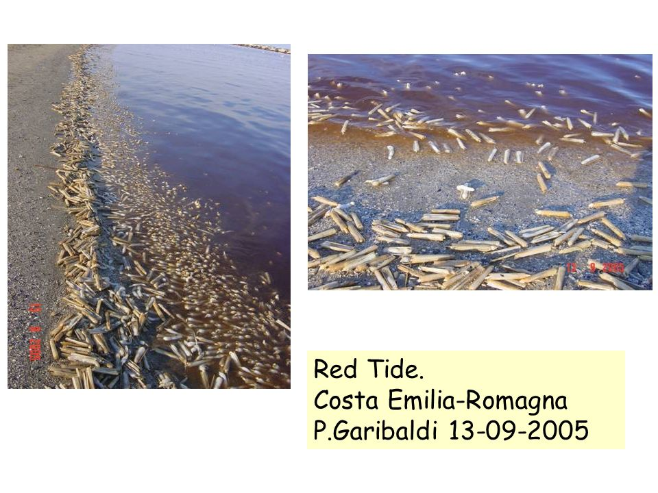 Red Tide. Costa Emilia-Romagna P.Garibaldi 13-09-2005