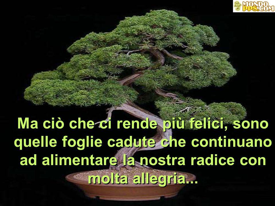 Ma ciò che ci rende più felici, sono quelle foglie cadute che continuano ad alimentare la nostra radice con molta allegria...