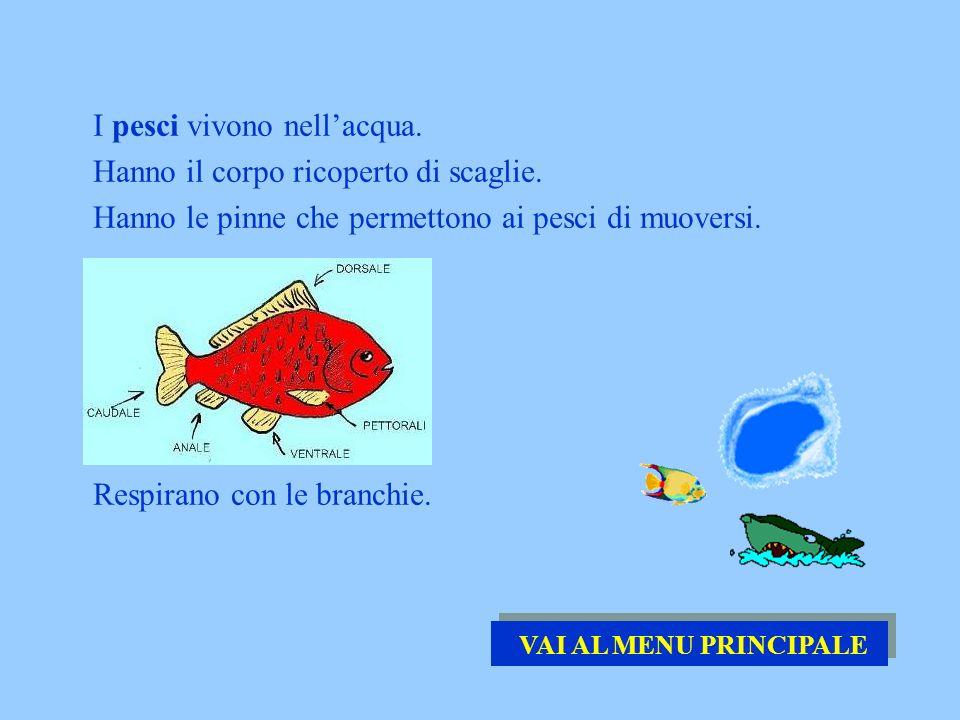 I pesci vivono nell'acqua. Hanno il corpo ricoperto di scaglie.
