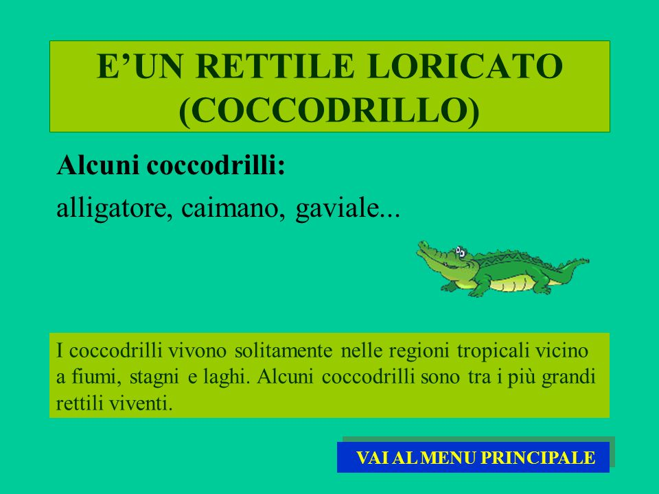 E'UN RETTILE LORICATO (COCCODRILLO)