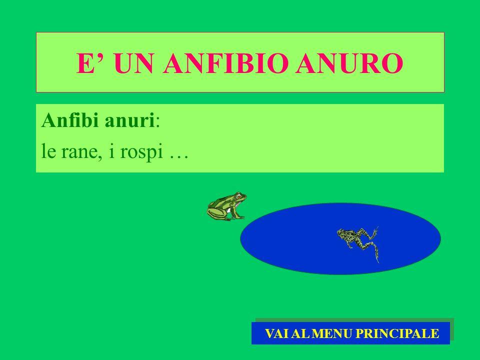 E' UN ANFIBIO ANURO Anfibi anuri: le rane, i rospi …