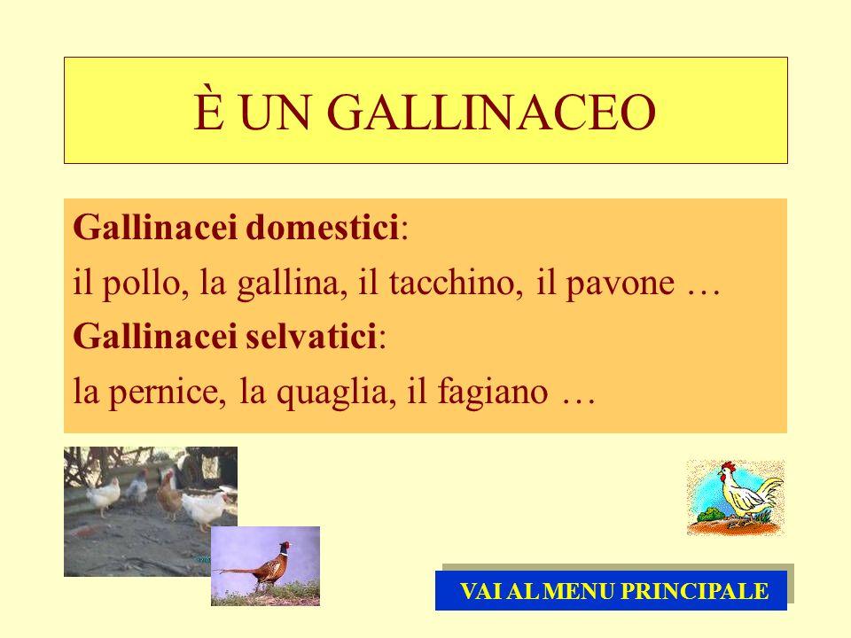È UN GALLINACEO Gallinacei domestici: