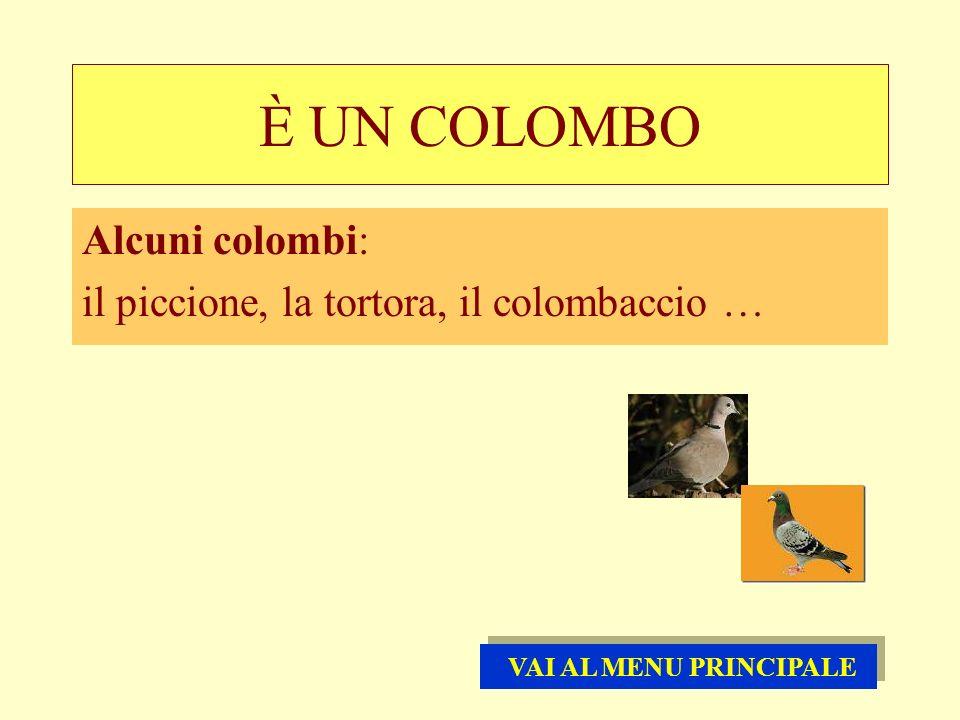 È UN COLOMBO Alcuni colombi: il piccione, la tortora, il colombaccio …