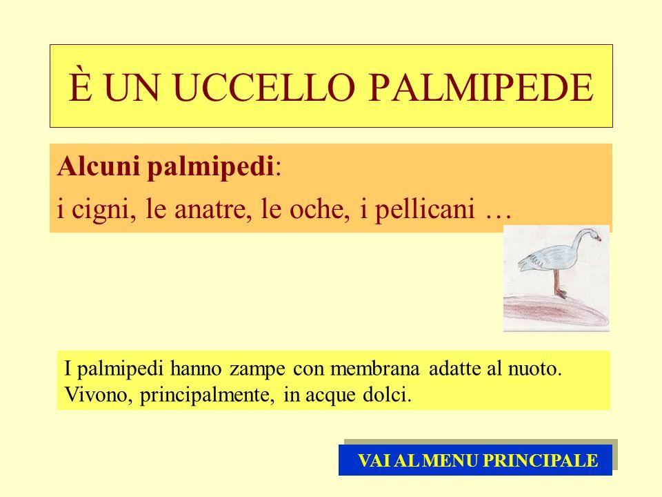 È UN UCCELLO PALMIPEDE Alcuni palmipedi:
