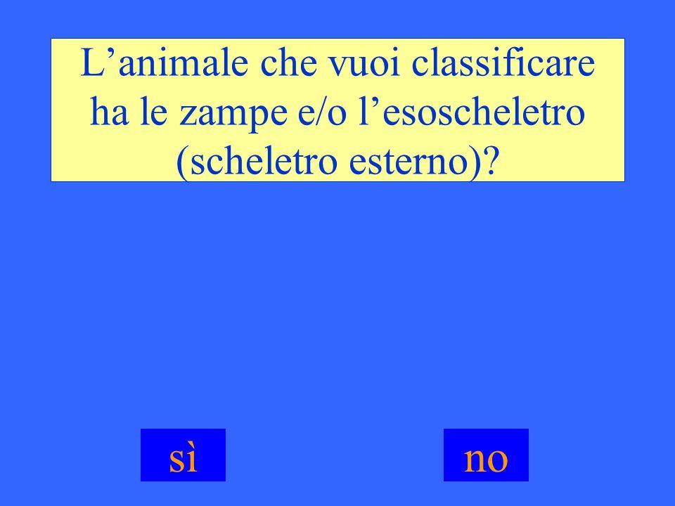 L'animale che vuoi classificare ha le zampe e/o l'esoscheletro (scheletro esterno)