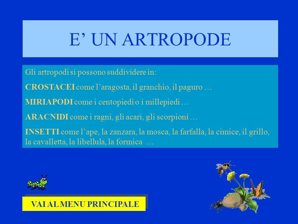 E' UN ARTROPODE Gli artropodi si possono suddividere in: