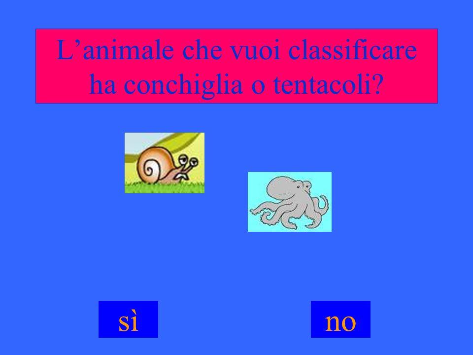 L'animale che vuoi classificare ha conchiglia o tentacoli