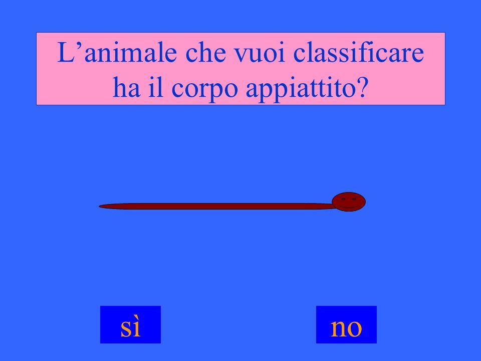 L'animale che vuoi classificare ha il corpo appiattito