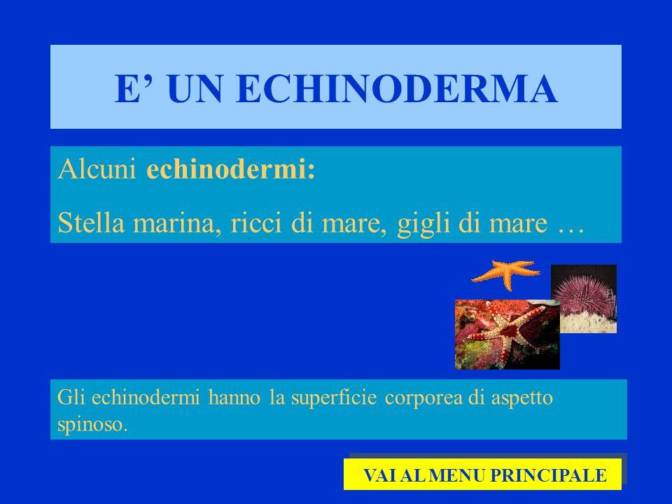 E' UN ECHINODERMA Alcuni echinodermi:
