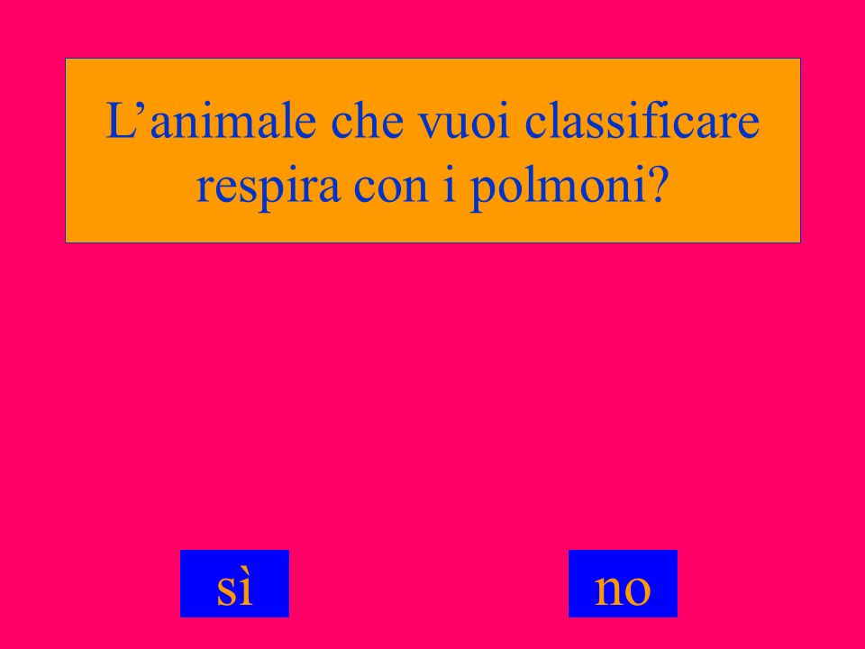 L'animale che vuoi classificare respira con i polmoni