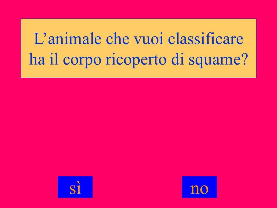 L'animale che vuoi classificare ha il corpo ricoperto di squame