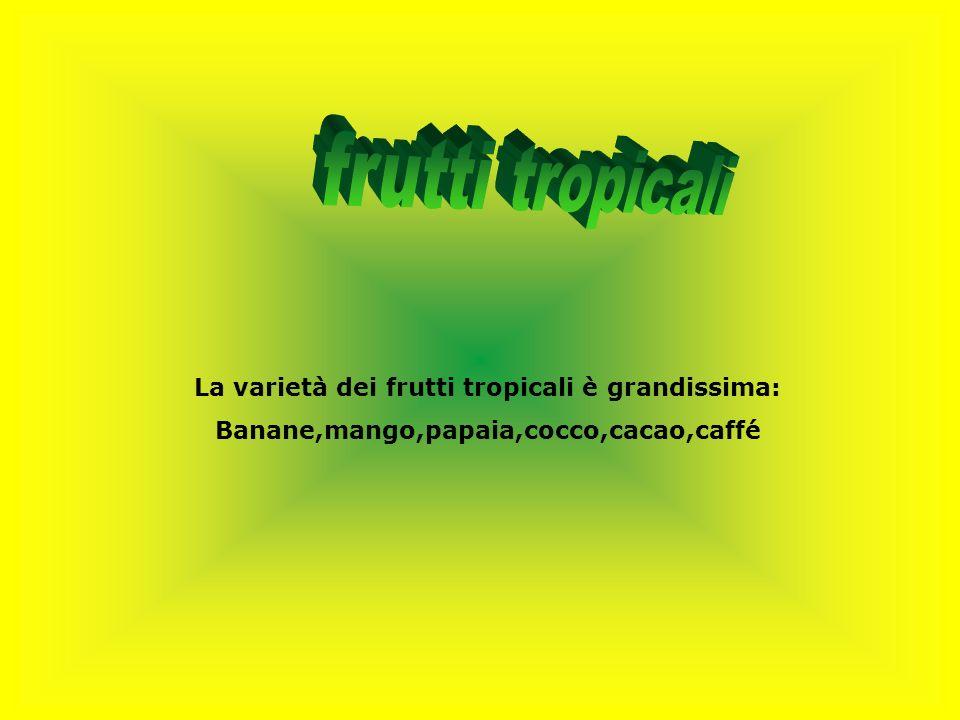 frutti tropicali La varietà dei frutti tropicali è grandissima: