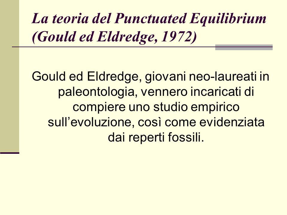 La teoria del Punctuated Equilibrium (Gould ed Eldredge, 1972)